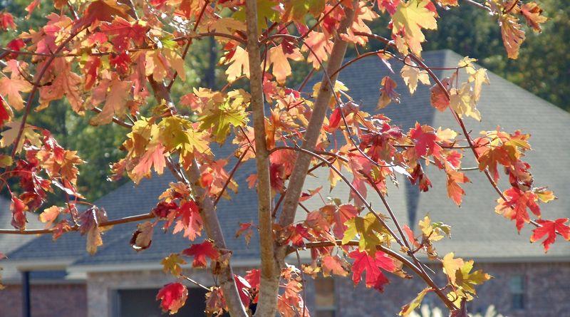 Tree autumn1